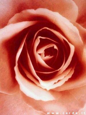 Rožės žiedas