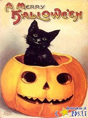 Cat in the pumpkin