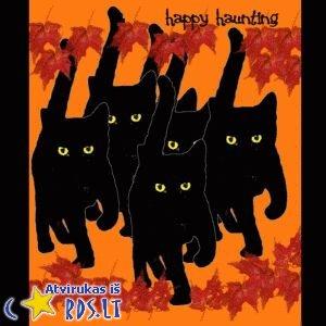 Juodos katės