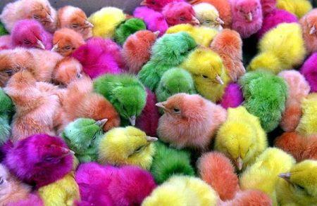 Motley chicken