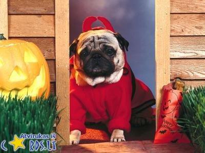 Helovyno šuniukas