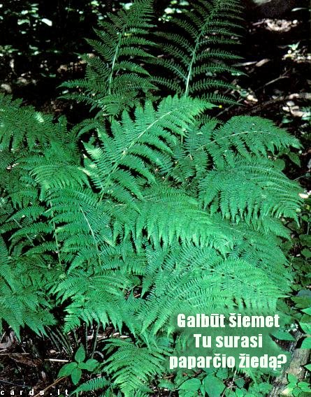 Will you find the blossom of a fern?