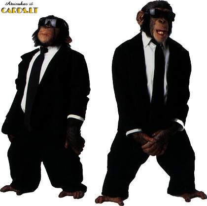 Beždžionės juodais drabužiais