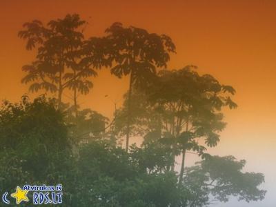 Saulėlydis tropikuose