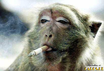 Rūkymas žudo!