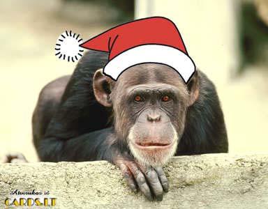 Kalėdinė beždžionėlė