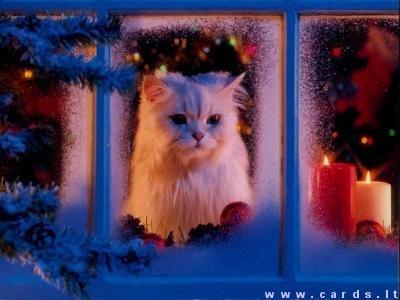Kačiukas prie lango