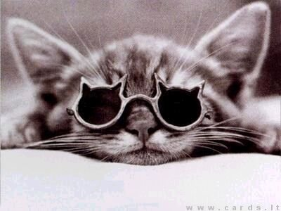 Katiniškiausias katinas