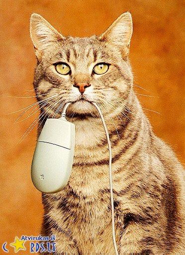 Žiūrėk, mama, sugavau pelę!
